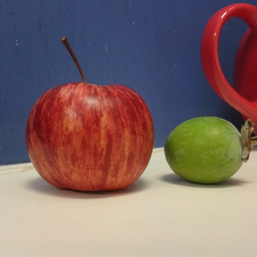 Day 2 - snack; an apple and a feijoa